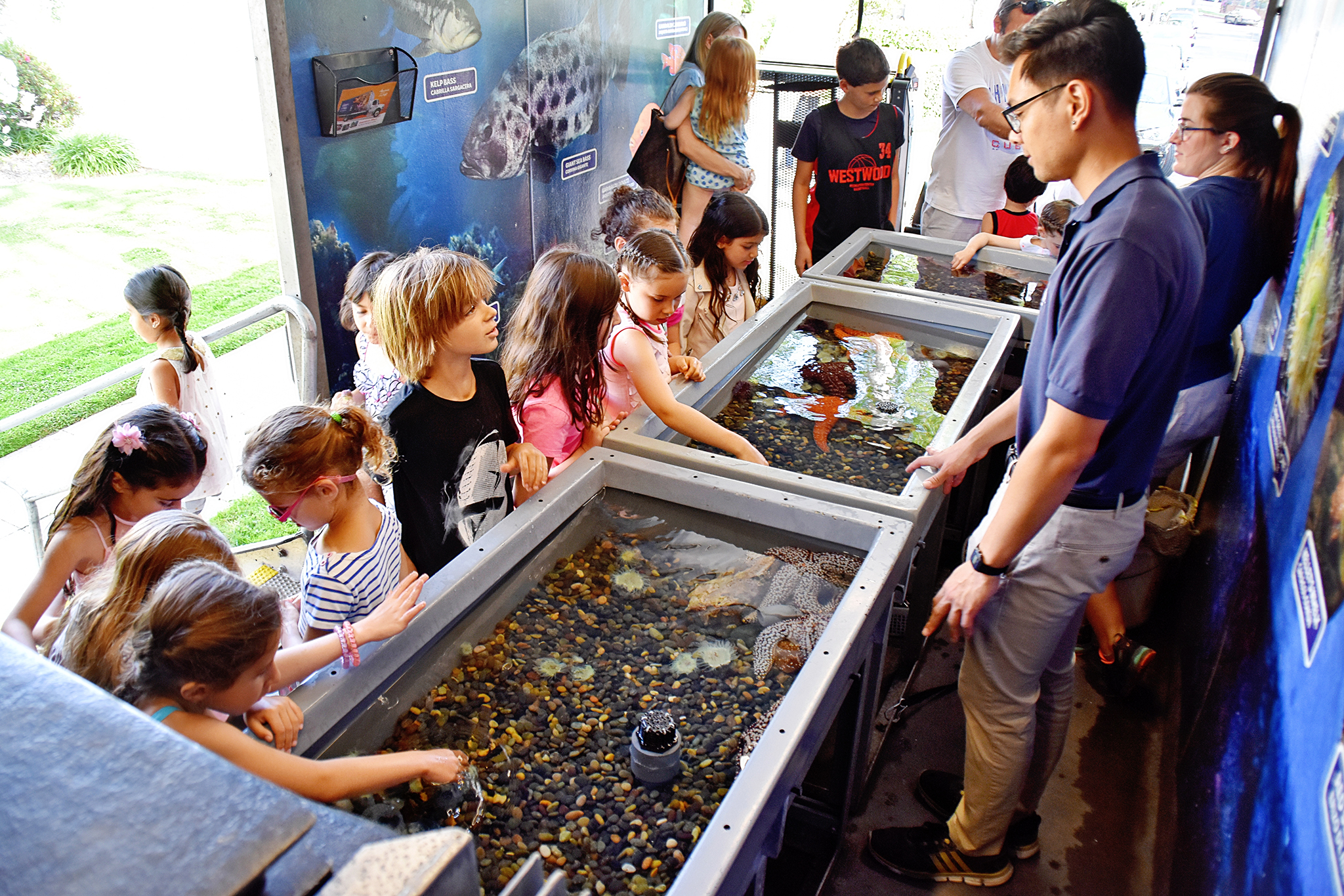 Aquarium of the Pacific - Mobile Touch Tank at our Under the Sea party!