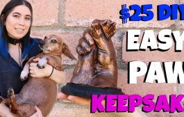 MAKE A LIFE CAST OF YOUR DOGS PAW USING PRECIOUS IMPRESSIONS MEMO...