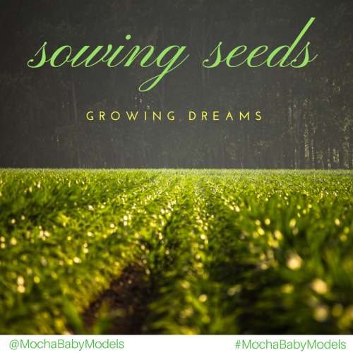 When the Seeds are Planted…...