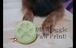 DIY Paw Print (Salt Dough Recipe)...