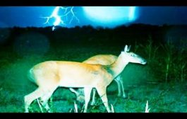 Trail Cams - Strange Creatures - Foot Prints...