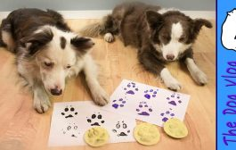 Paw Print Stamp of YOUR Dog - DIY...