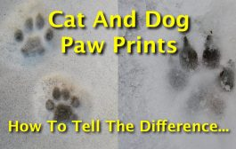 Cat And Dog Paw Prints: How To Tell The Difference Between Canine...