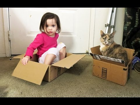SHIPPING BABIES AND CATS!...
