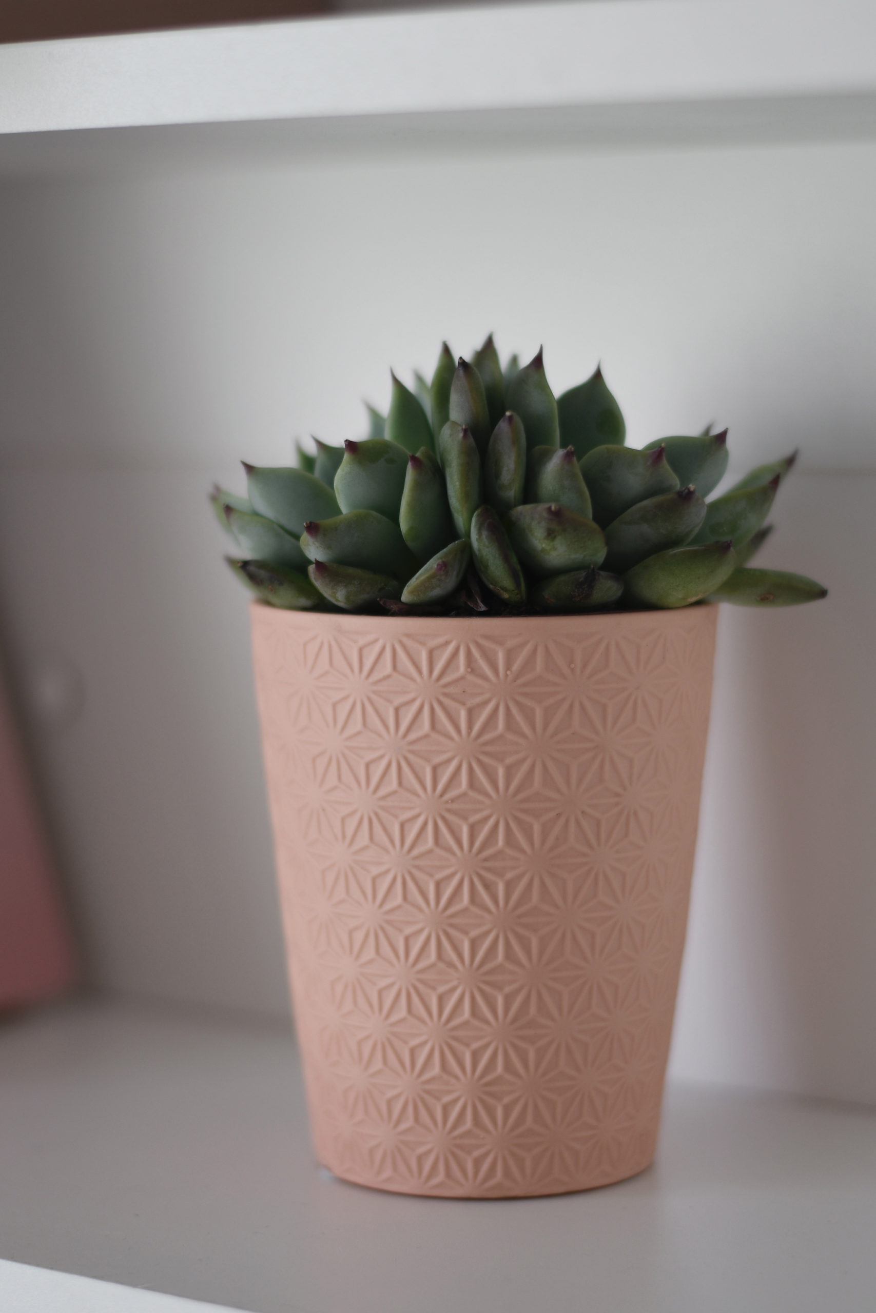 Succulents add a bit of greenery and are easy to take care of!