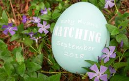 Ready to Hatch? Check Out this DIY Pregnancy Announcement!...