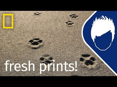 Wolf Prints (Episode 9) | wild_life with bertie gregory...